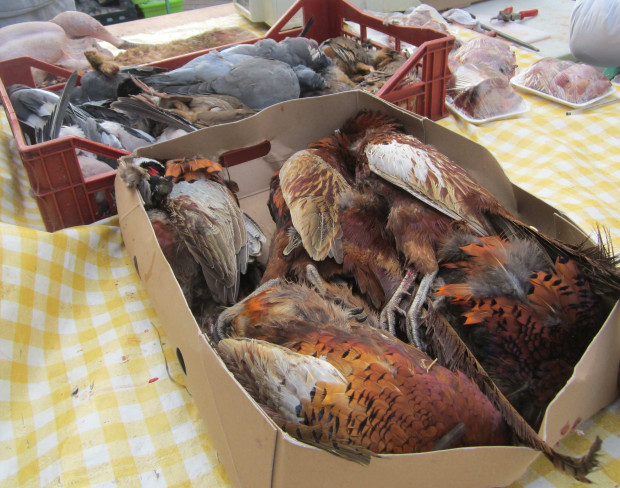 pheasantleeds